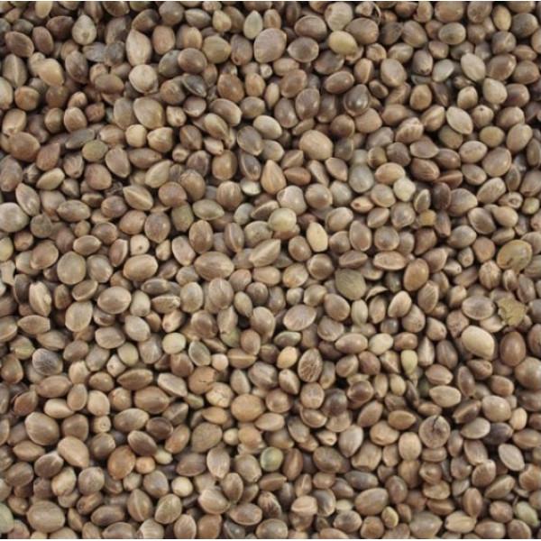 Семена технической конопли