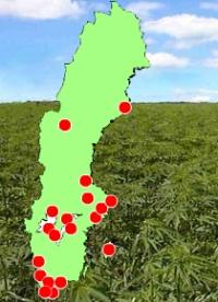 В Швеции разрешено потребление медицинской конопли