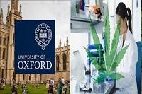 В Оксфордском университете стартовал проект по изучению конопли